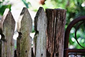 garden-433349_640